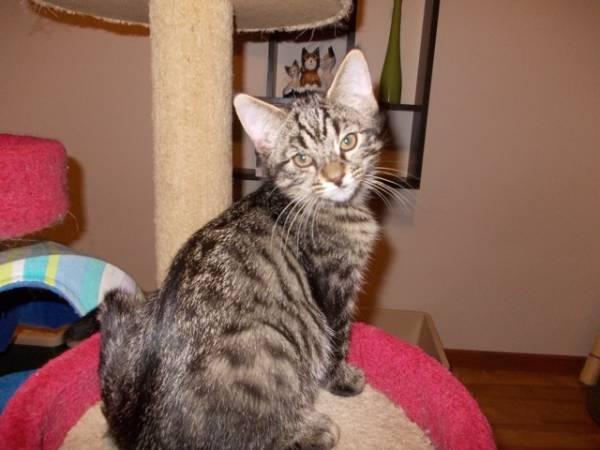 PENINSULA CAT RESCUE ADOPTION DAY