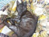 Adoption Day Pets Domain Frankston