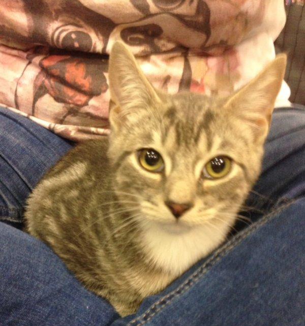 Kitten of the Week-Dexter