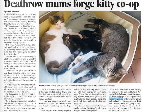 Mornington News