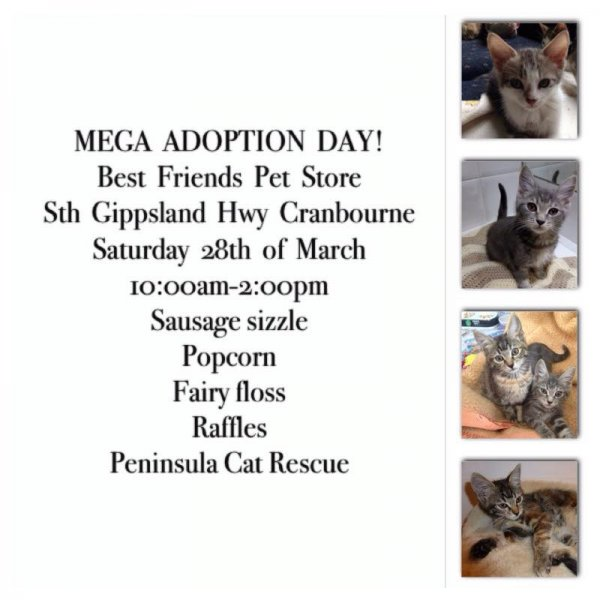 Adoption Days